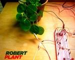 robertplant-ccc.jpg (226 KB)